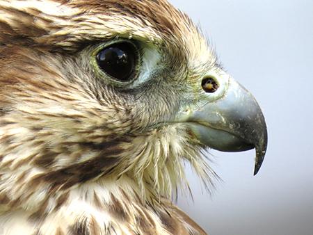מסלול עין הנץ: קורסים ממוקדי מטרה