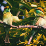 איכות חיים זה להקשיב לשירת ציפורים